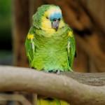 Arbitro interrompe la partita: espulso un pappagallo