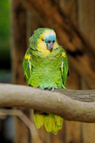 pappagallo espulso da arbitro di calcio
